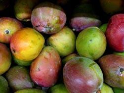 Mango de Africa